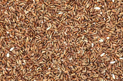 Organic Red Rice Background Royalty Free Stock Photography