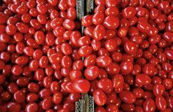 Organic ripe tomatoes in abundance stock photography