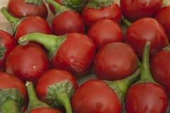 Organic red round chilli background. Hot organic red round chilli background Royalty Free Stock Photos