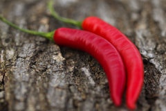 Organic Red Spicy Peppers on wooden Background Stock Images