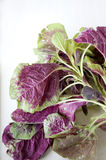 Organic red spinach Royalty Free Stock Photo