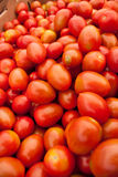Organic red tomatoes. Bunch of ripe red organic tomatoes Stock Photo