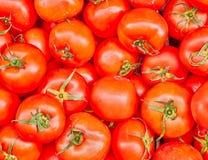 Organic red tomatoes closeup Stock Image