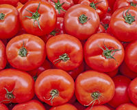 Organic red tomatoes closeup Royalty Free Stock Images