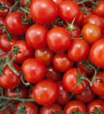 Organic Red Vine Tomatoes royalty free stock image