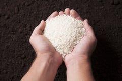 Organic Rice Stock Image