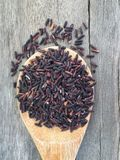Organic rice berry Stock Photography