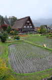 Organic rice field in the shirakawago village area Royalty Free Stock Photos
