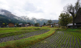 Organic rice field in the village area Stock Photography