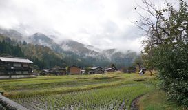 Organic rice field in the village area Stock Image