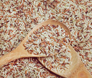 Organic rice Stock Image