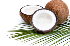 Organic ripe coconuts with green palm leaf on coconut leaf Royalty Free Stock Image