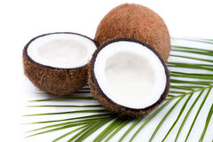 Organic ripe coconuts with green palm leaf on coconut leaf Stock Image