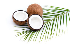 Organic ripe coconuts with green palm leaf on coconut leaf Royalty Free Stock Photography