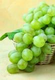 Organic ripe fresh white grapes Royalty Free Stock Photo