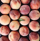 Organic ripe juicy peaches, closeup royalty free stock photo