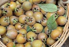 Organic ripe loquats in a basket Stock Image