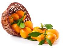 Organic ripe mandarins in basket on white background Royalty Free Stock Images