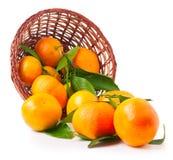 Organic ripe mandarins in basket on white background Stock Images