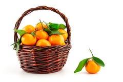Organic ripe mandarins (tangerines) in basket Stock Images