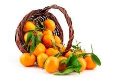 Organic ripe mandarins (tangerines) in basket Stock Image