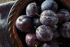 Organic Ripe Purple Prune Plums. Ready to Eat Stock Photography