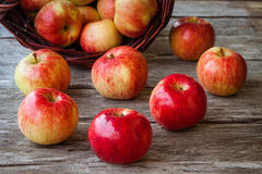 Organic ripe red apples Royalty Free Stock Photos