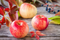 Organic ripe red apples Stock Photography