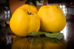 Organic Ripe yellow quince fruit on wooden table. Close up shot Royalty Free Stock Image