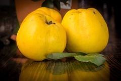 Organic Ripe yellow quince fruit on wooden table. Organic Ripe yellow quince t on wooden table. Close up shot Royalty Free Stock Photos
