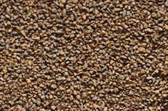 Organic roasted barley Royalty Free Stock Photography