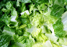 Organic Romaine Lettuce Stock Photos