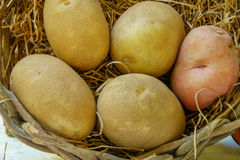 Organic Russet and red potatoes sit inside a hay filled wicker b Stock Image