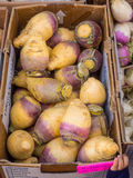 Organic rutabaga Stock Photos