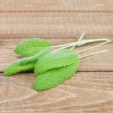 Organic sage Stock Image