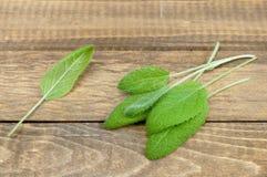 Organic sage Royalty Free Stock Image