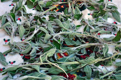 Organic sage plant leaves Royalty Free Stock Photos