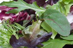 Organic salad Stock Photos