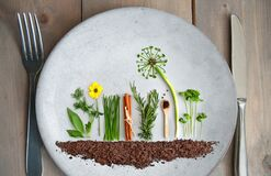 Organic summer herb salad garden concept. Organic salad and herb garden on a plate, with dandelion made from parsley, chives and pumpkin seeds