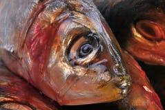 organic sardine Stock Image