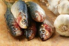 Organic sardine on a timber board Stock Image