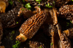 Organic Sauteed Morel Mushrooms. REady to Eat Stock Images