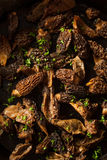 Organic Sauteed Morel Mushrooms. REady to Eat Royalty Free Stock Photography