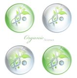 Organic Science glossy balls. With DNA and green leaves over white background Royalty Free Stock Photography