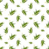 Organic Seamless pattern with eucalyptus leaves. Vector seamless pattern with eucalyptus twig, flowers and leaves. Elegant background for website, packaging Royalty Free Stock Photos