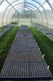 Organic seedlings greenhouse Royalty Free Stock Photo