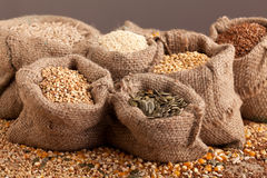 Organic seeds in jute sack Stock Photography