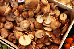 Organic Shiitake Mushrooms Royalty Free Stock Photos