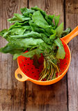 Organic sorrel in strainer. Organic fresh sorrel in strainer Royalty Free Stock Images