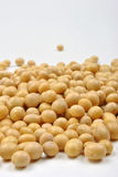 Organic soya beans Royalty Free Stock Photos